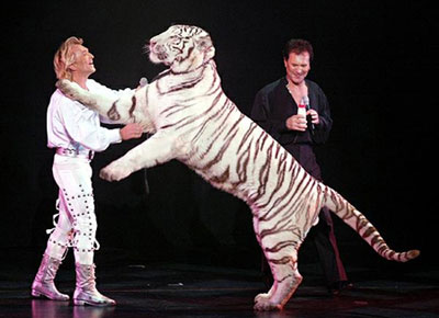 magicians with white tigers