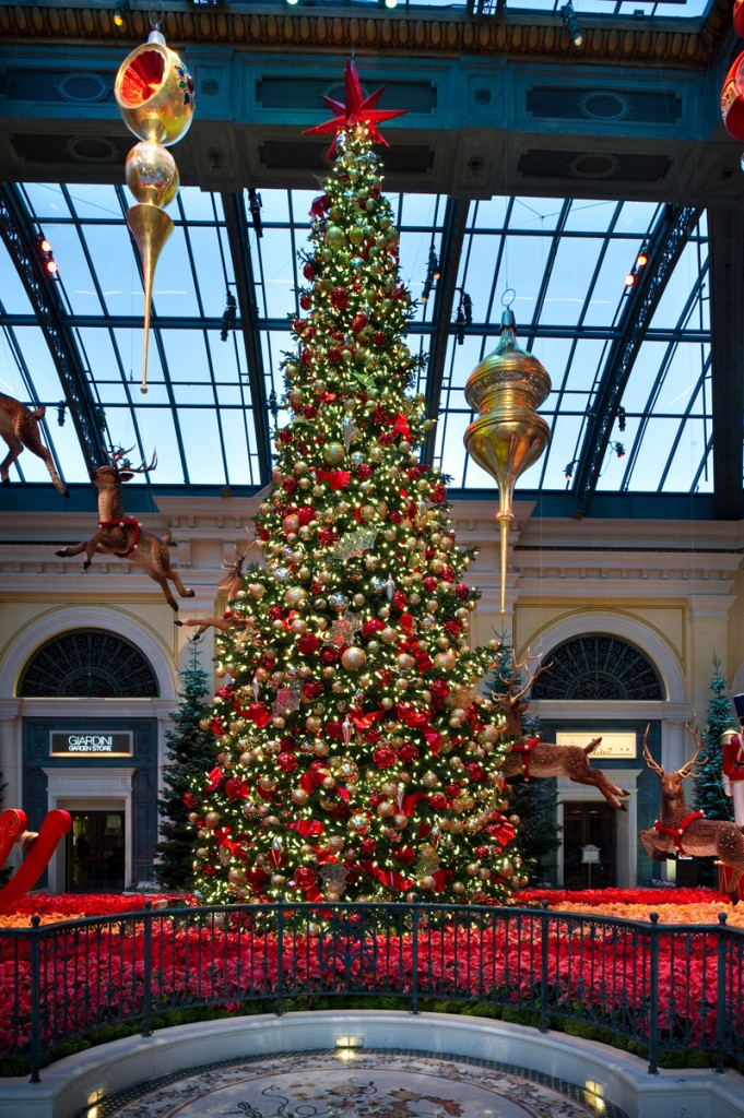 This Shasta Fir is the centerpiece of this year's display at the Bellagio.