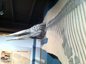 Nevada's State Fossil, the Ichthyosaur