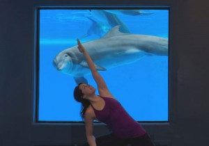 Yoga with the dolphins at the Mirage.