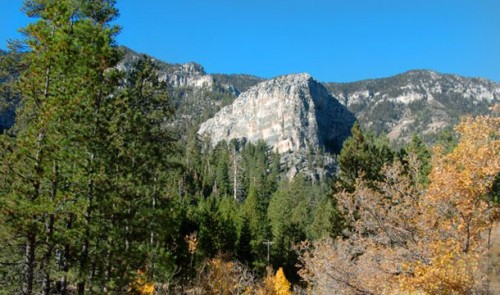 Mount Charleston in summer