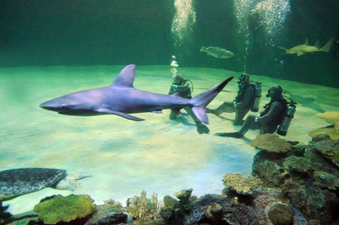 Vegas Insiders feed the turtles, swim with sharks and more at Shark Reef