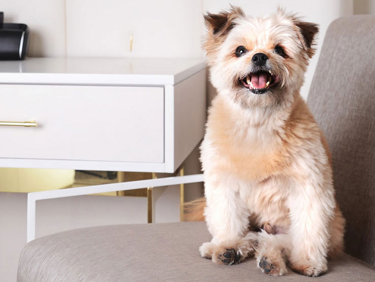 Delano Las Vegas is a blissful retreat for your four-legged friend.
