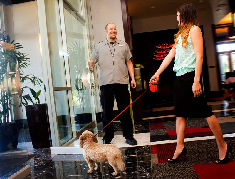 Your dog will enjoy a perfect home away from home at the Plantinum Hotel in Vegas.