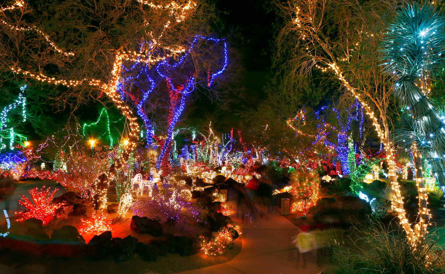 Holiday lights cover the cacti at Ethel M's Chocolate Factory and Cactus Gardens. Photo courtesy of L.E. Baskow / Las Vegas Sun.