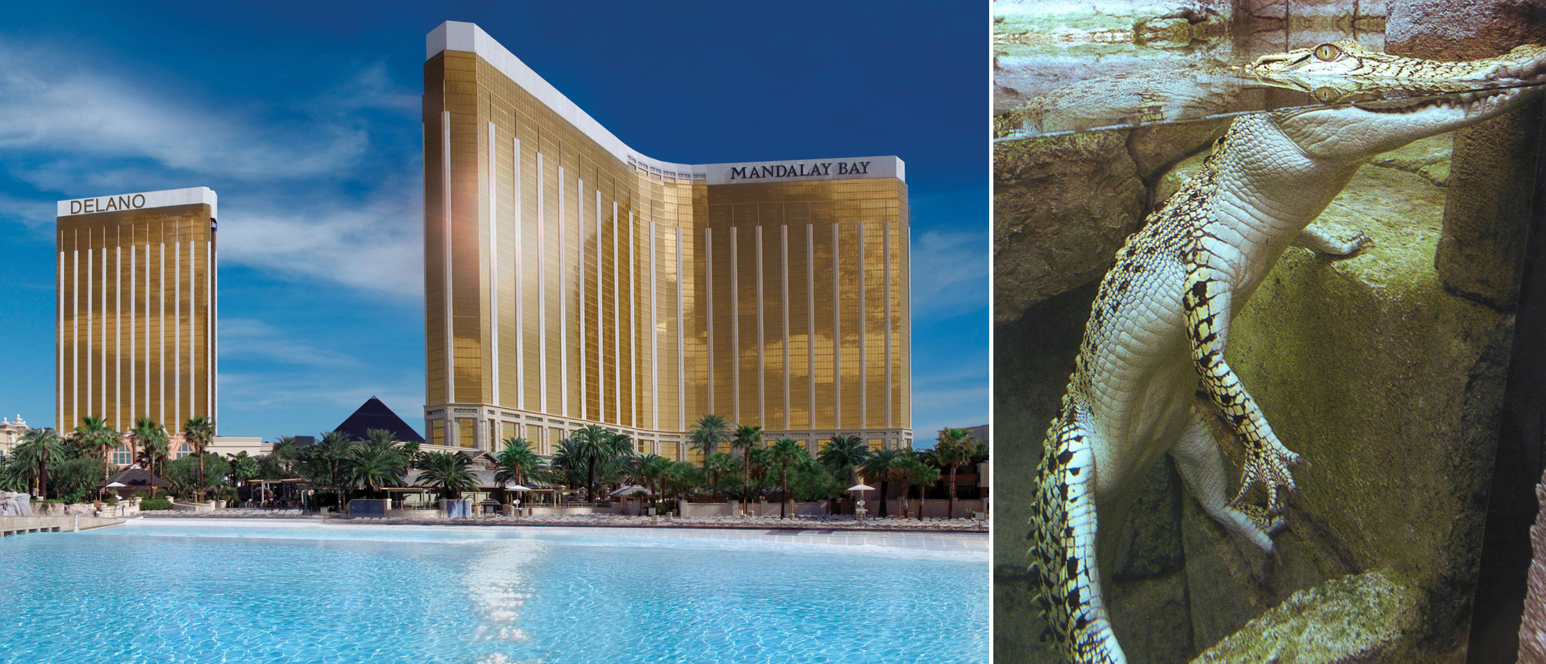 Mandalay Bay exterior and Shark Reef