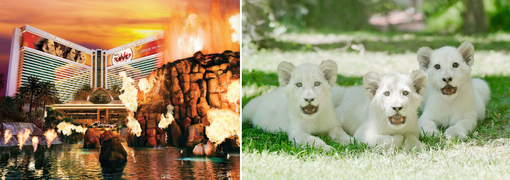 The Mirage exterior and white lion cubs