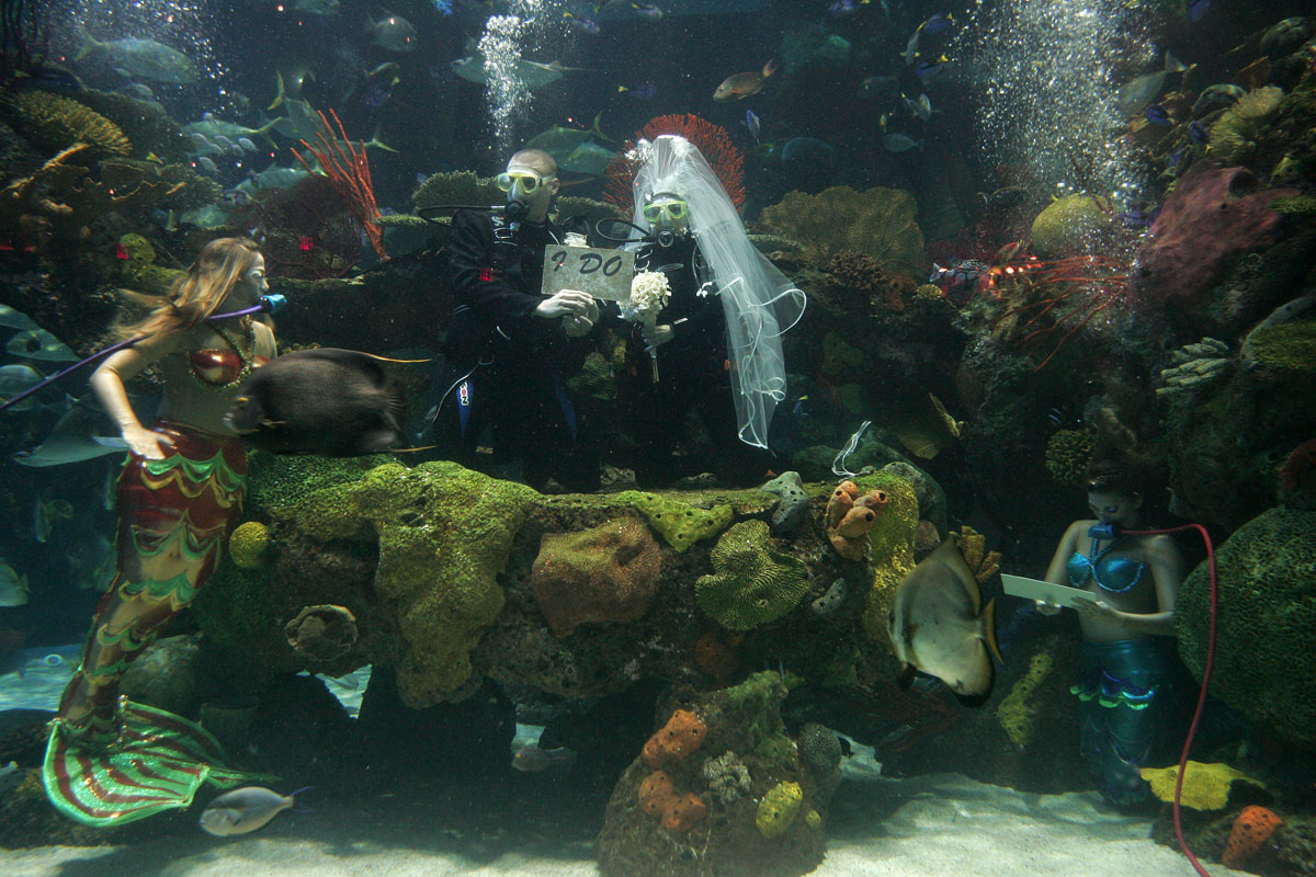 Marriages held in the Silverton's saltwater aquarium are sure to start off swimmingly – as long as couples are careful of the sharks and stingrays. Photo courtesy of the Silverton.