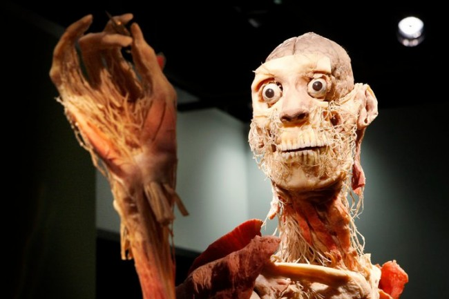 Photo courtesy of Bodies: The Exhibition