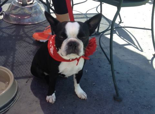 We couldn't find a karaoke picture we liked, so here's a picture of a pretty puppy on their patio. Yep, you can bring pets to their patio. Pretty puppy photo courtesy of Crown and Anchor.