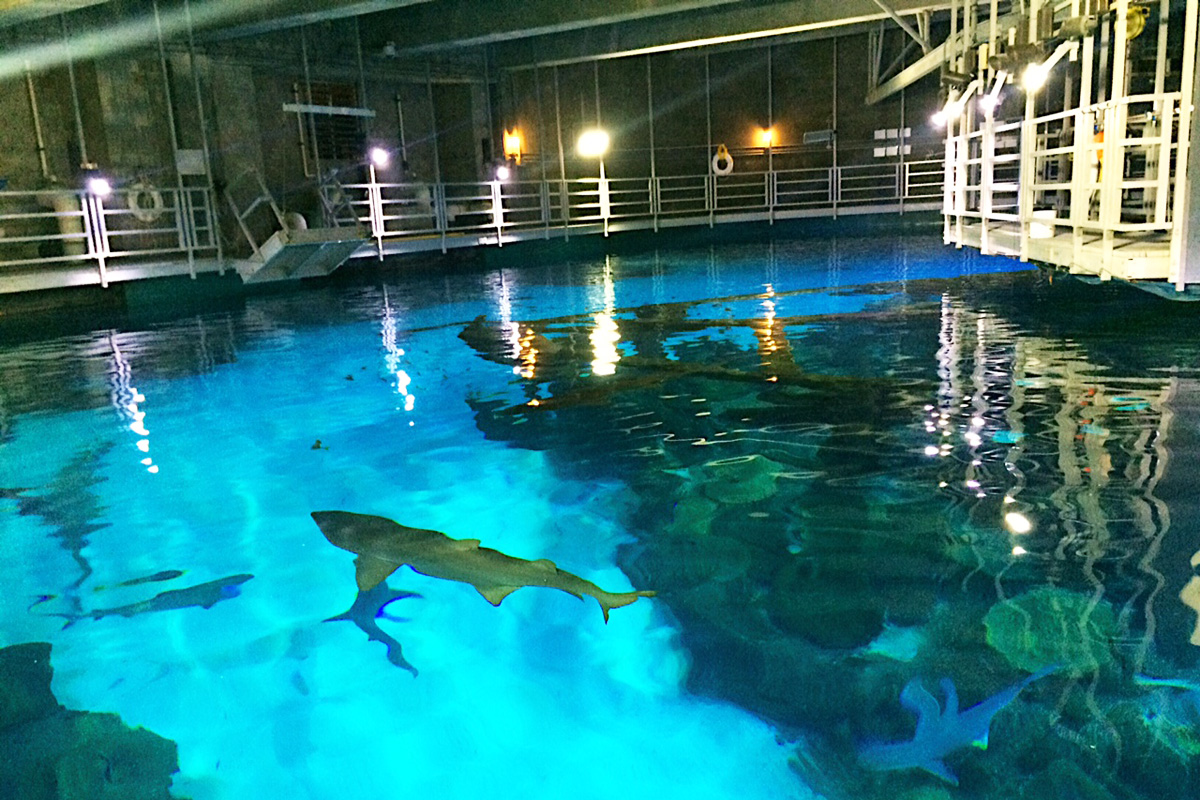 Behind The Scenes At Mandalay Bay S Shark Reef Aquarium With Our