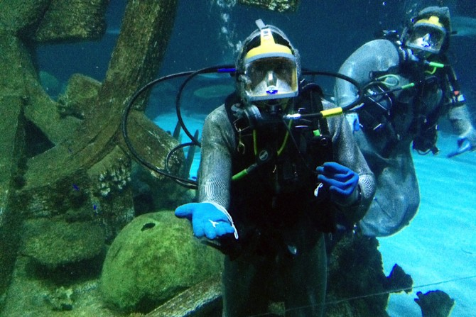 Behind the scenes at Mandalay Bay's Shark Reef Aquarium with our Vegas Insiders