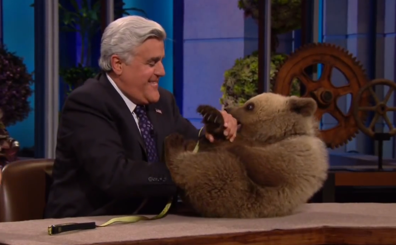 Jay Leno, seen here trying to teach a bear to eat people. Good plan, Jay. Photo courtesy of Jay Leno.