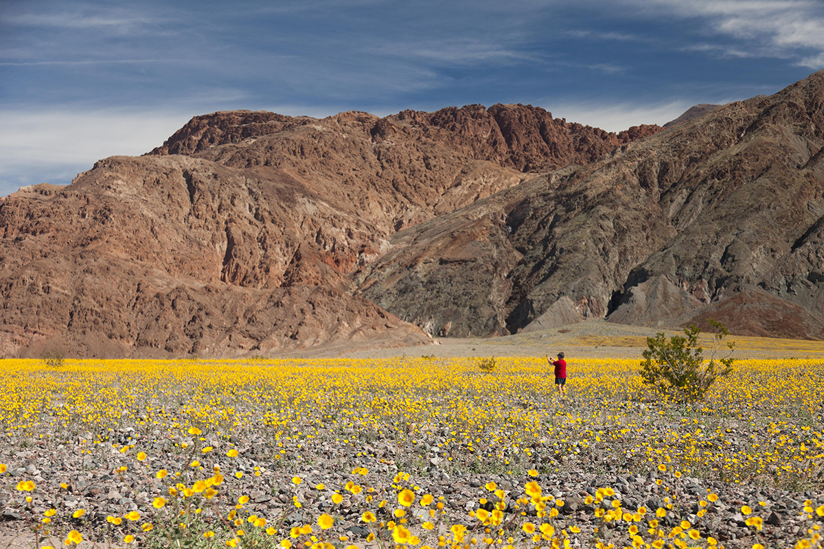 Death Valley super bloom photo courtesy of Alonzo Wright.
