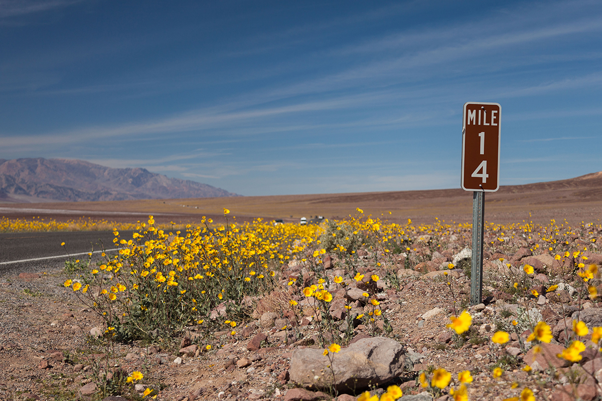 Death Valley super bloom. Photo courtesy of Alonzo Wright.