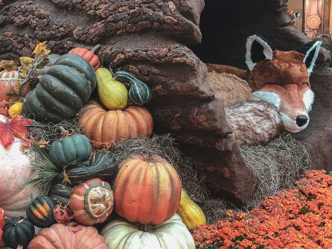 Fall has arrived and the Bellagio Conservatory in Las Vegas went all out